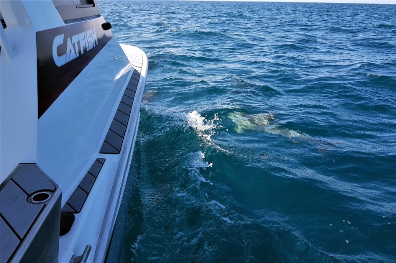 Dolphin in the Water-b